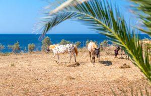 Skinos Ilivatos Horses